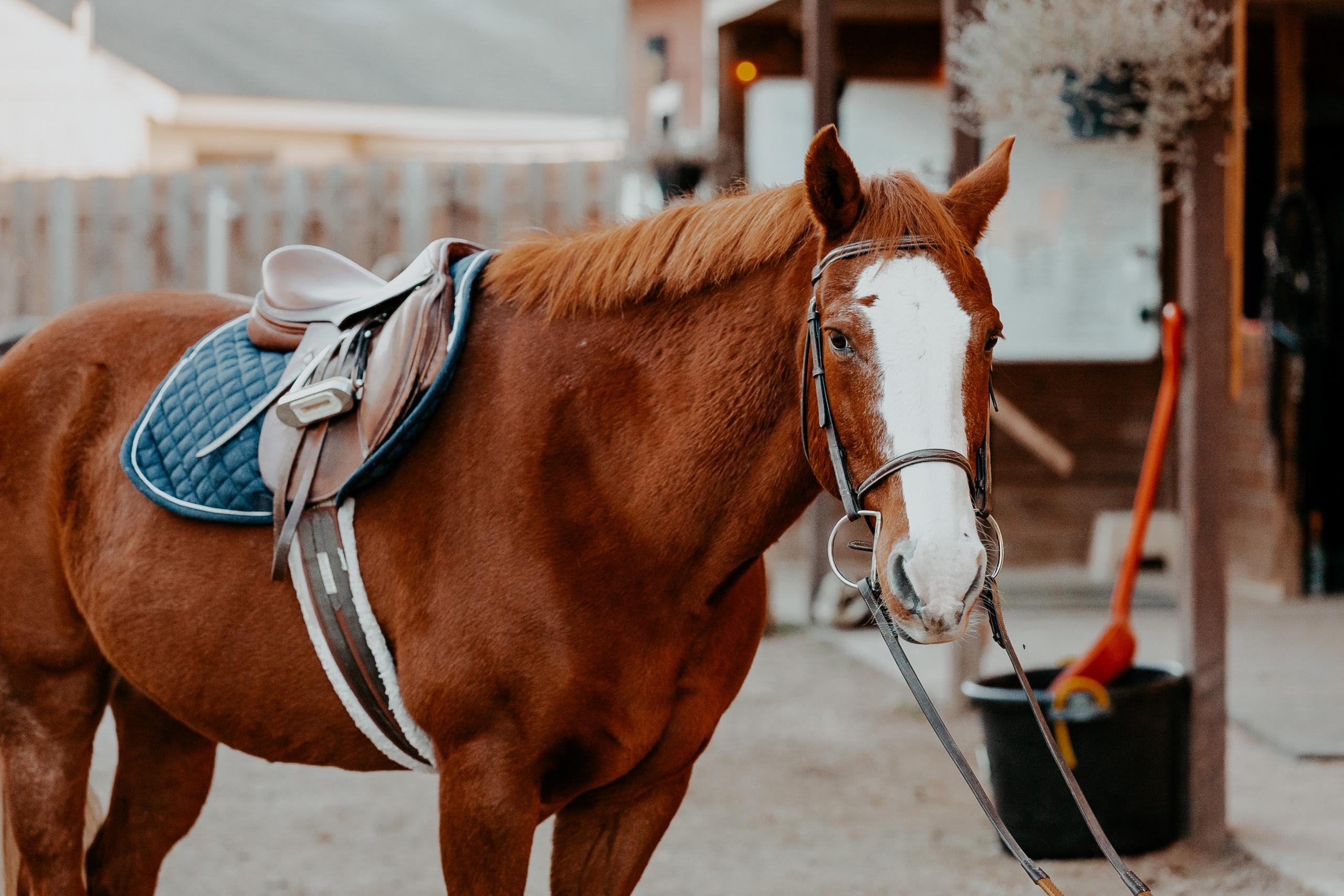 horse lessona